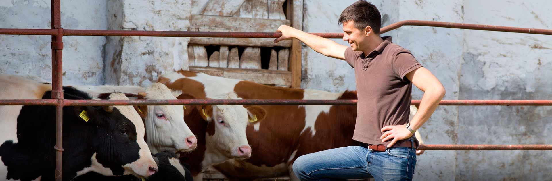 dayfarm Agrotrainee - Ukrainian agro practicants in Europe