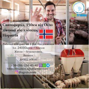 Работа в Норвегии